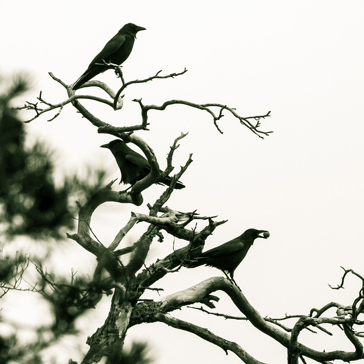 Oh, S*it! Swedish City Pestered by Hordes of Jackdaws