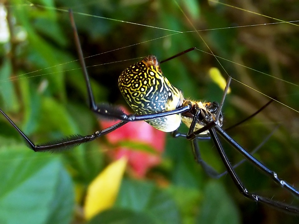 Spinning Spider Silk Now Possible