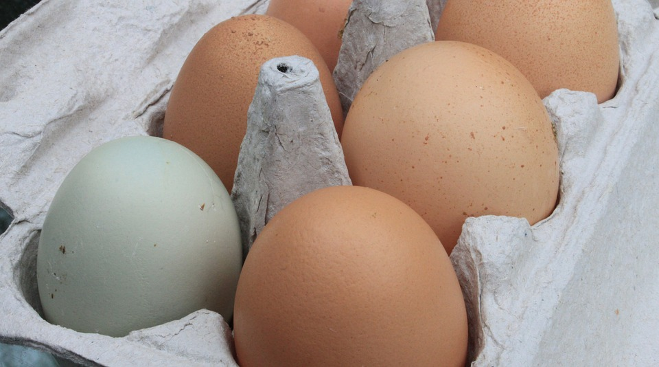 Why Americans Refrigerate Eggs