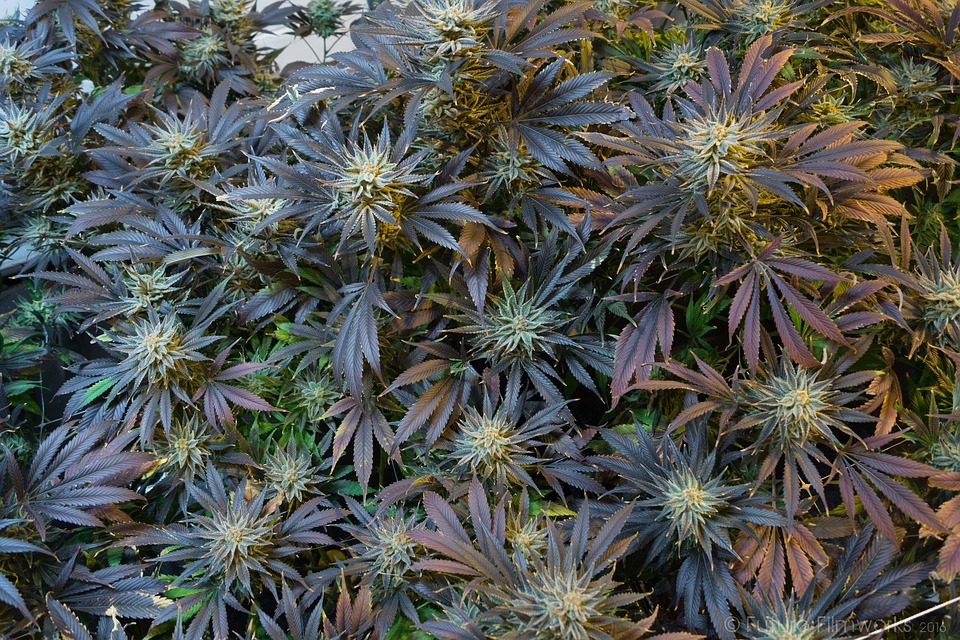 This Pot-Entrepreneur Is Fighting Prohibition, and Winning