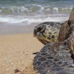 Paradise Lost: Hawaii Home to One of the World's Dirtiest Beaches