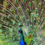 In Praise Of Virtue Signaling